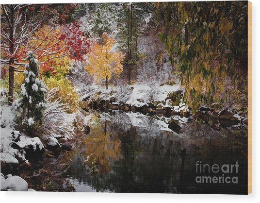 Colorful Pond Wood Print