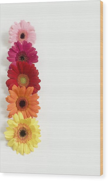 Colorful Row Of Gerbera Daisies Wood Print