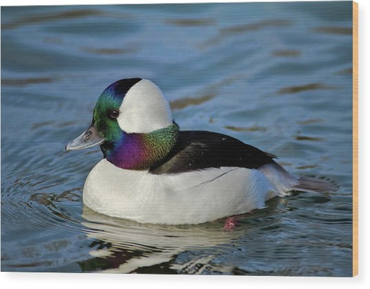 Colorful Waterfowl Wood Print
