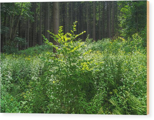 Colors Of A Forest In Vogelsberg Wood Print