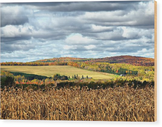 Colors Of The Field Wood Print by Gary Smith