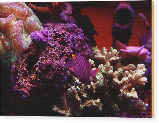 Colors Of Underwater Life Wood Print