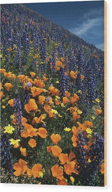 Colossal California Wildflowers Wood Print