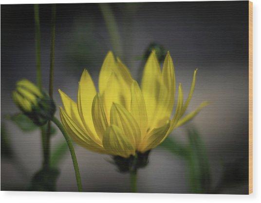 Colour Of Sun Wood Print
