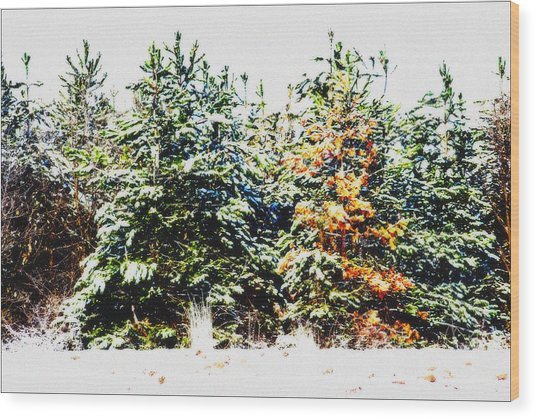 Coloured Trees  Wood Print