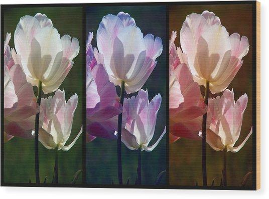 Coloured Tulips Wood Print