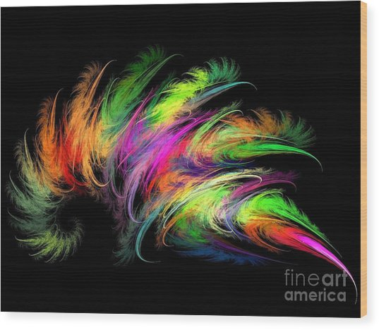 Colourful Feather Wood Print