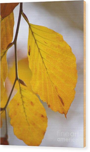 Colours Of Autumn Wood Print