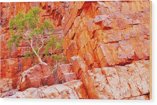 Colours Of Ormiston Gorge, Northern Territory Wood Print