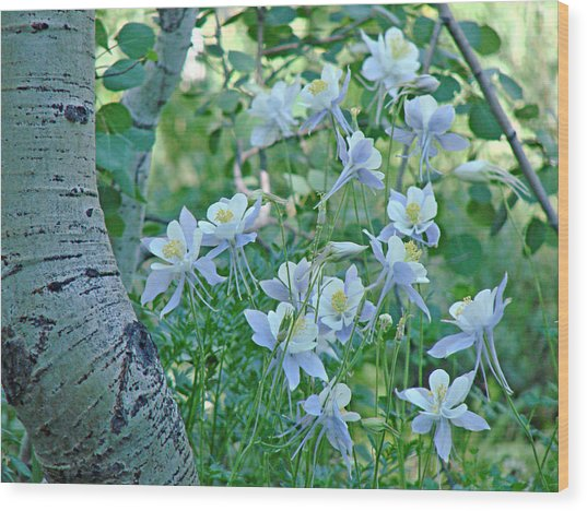 Columbine Meadow Wood Print