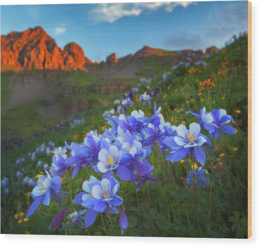 Columbine Sunrise Wood Print