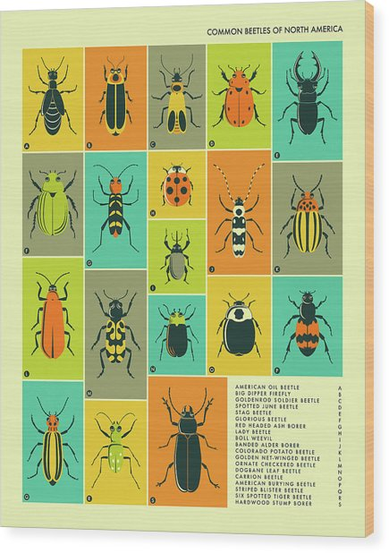 Common Beetles Of North America Wood Print