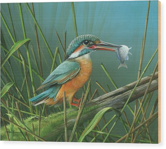 Common Kingfisher Wood Print