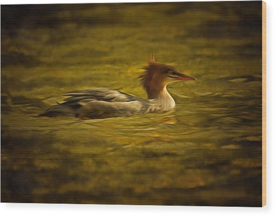 Common Merganser 2 Wood Print