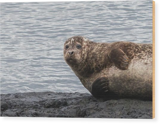 Common Seal Portrait Wood Print