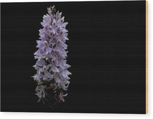 Common Spotted Orchid Wood Print