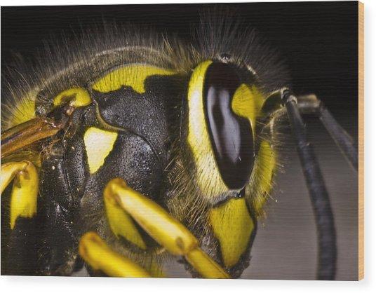 Common Wasp Vespula Vulgaris Close-up Wood Print by Gabor Pozsgai