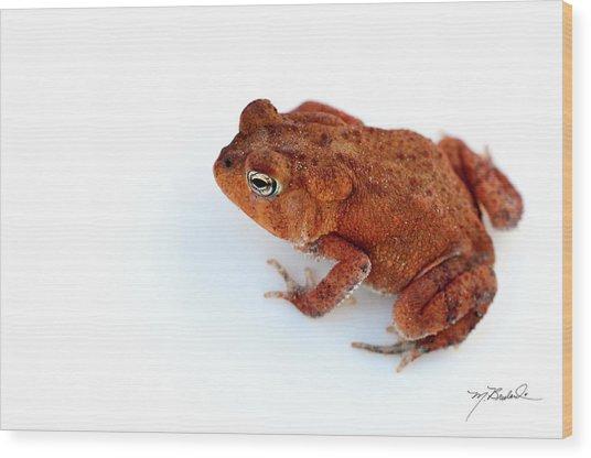 Common Yard Toad Wood Print by Melissa Wyatt