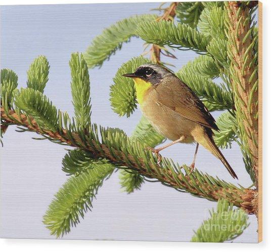 Common Yellow-throat Wood Print