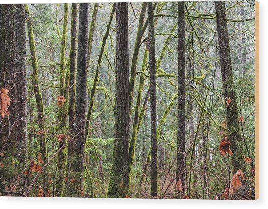 Comox Valley Forest-1 Wood Print