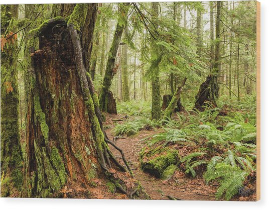 Comox Valley Forrest-3 Wood Print