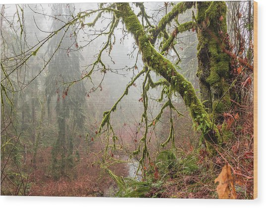Mist In The Forest Wood Print