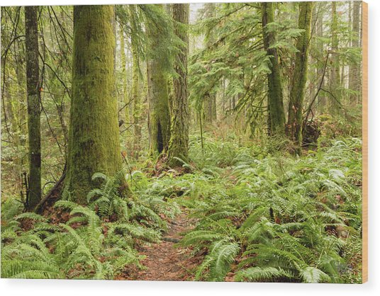 Comox Valley Forrest-5 Wood Print