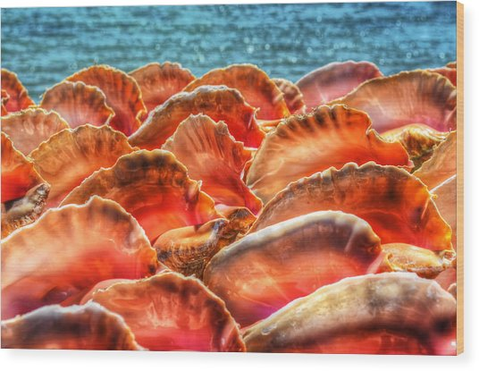 Conch Parade Wood Print