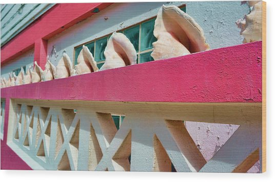 Conch Shells On A Pink Wall - Ambergris Caye, Belize Wood Print