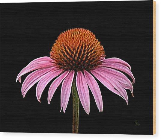 Cone Flower - Rudbeckia Wood Print