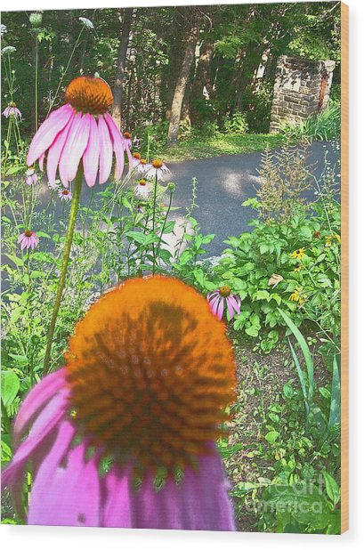 Cone Flowers And Others Wood Print by Beebe  Barksdale-Bruner