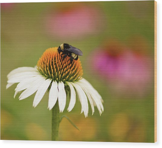 Coneflower And Bee Wood Print