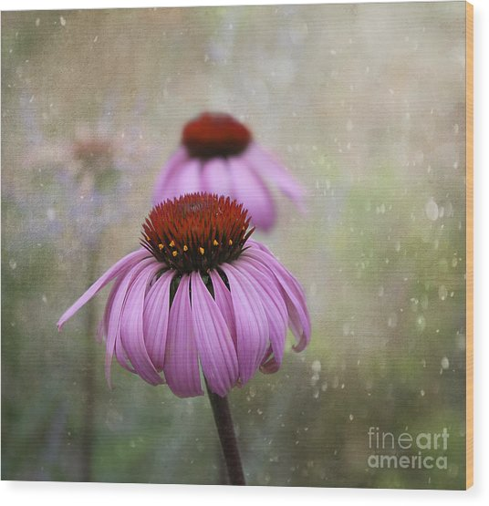 Coneflower Dream Wood Print