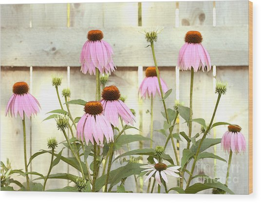 Coneflower Patch Wood Print