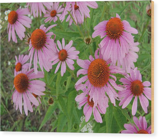 Coneflowers Wood Print by Audrey Venute