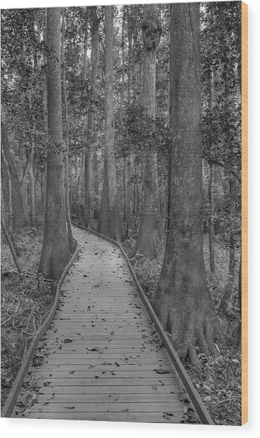 Wood Print featuring the photograph Congaree 2017 03 Bw by Jim Dollar