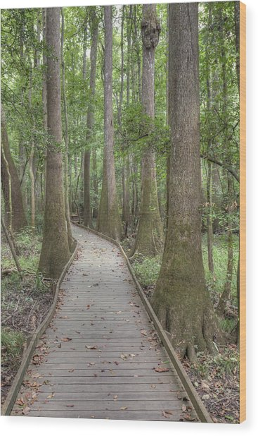 Wood Print featuring the photograph Congaree 2017 03 by Jim Dollar