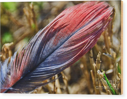 Congo African Grey Feather Wood Print