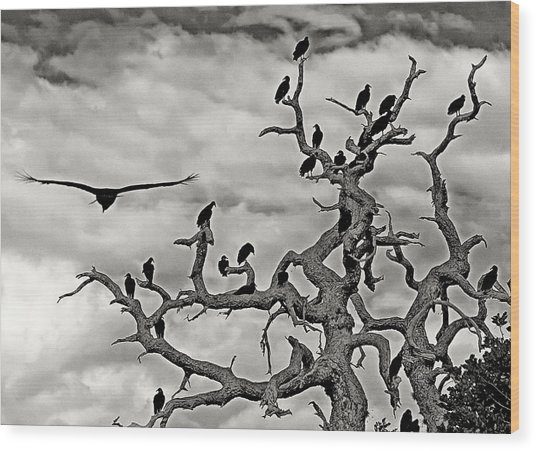 Congress Of Vultures Wood Print