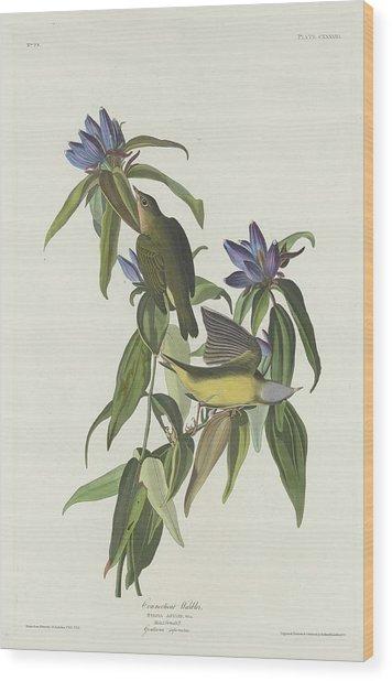 Connecticut Warbler Wood Print