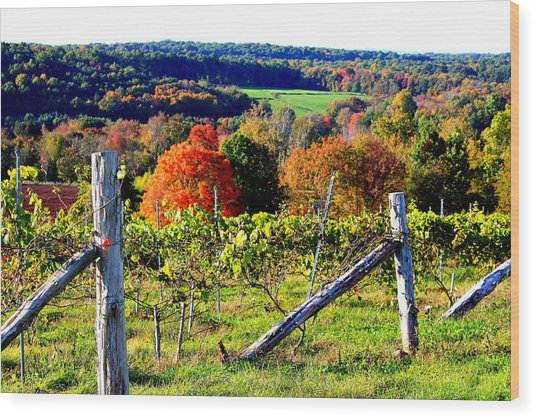 Connecticut Winery Wood Print