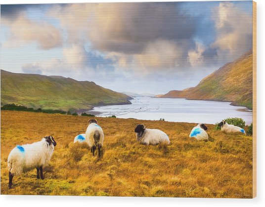 Connemara Sheep Grazing Over Killary Fjord Wood Print by Mark Tisdale