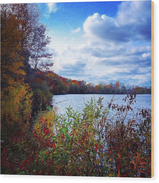 Conservation Park And Pine River In The Fall Wood Print
