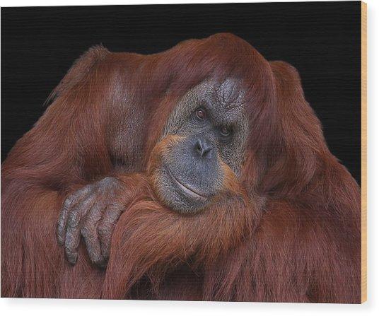 Contented Orangutan Wood Print