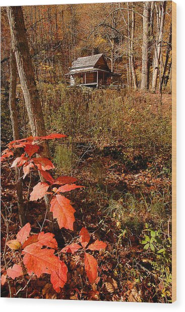 Cook Cabin Wood Print