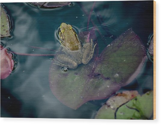 Cool Frog-hot Day Wood Print