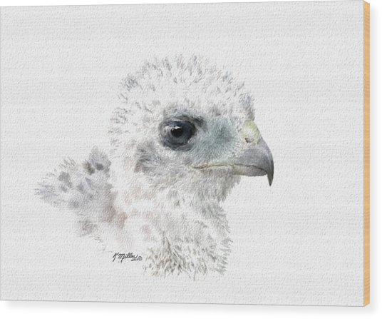 Coopers Hawk Chick Wood Print