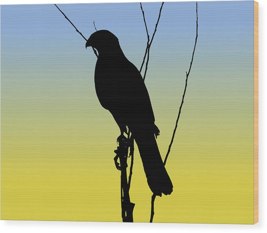 Coopers Hawk Silhouette At Sunrise Wood Print