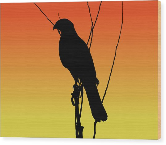 Coopers Hawk Silhouette At Sunset Wood Print