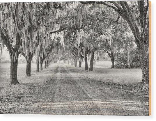 Coosaw Plantation Avenue Of Oaks Wood Print